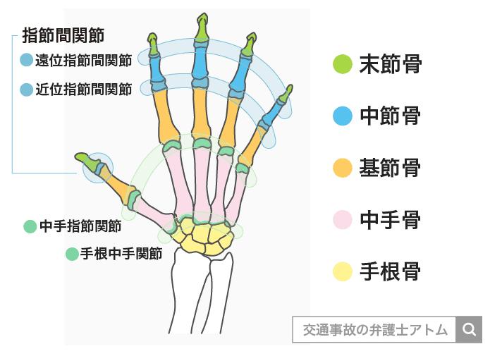 腕部分の骨や関節の名称